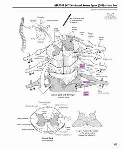 A Visual Analogy Guide To Human Anatomy And Physiology