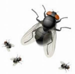 Se Débarrasser Des Mouches Naturellement : comment se d barrasser des mouches ~ Melissatoandfro.com Idées de Décoration