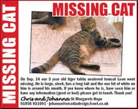 missing cat what do i do if my cat goes missing