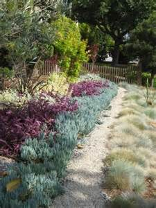 Low Water Plants and Gravel Garden Ideas