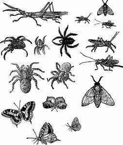 Bugs And Insects Clipart - Clipart Suggest