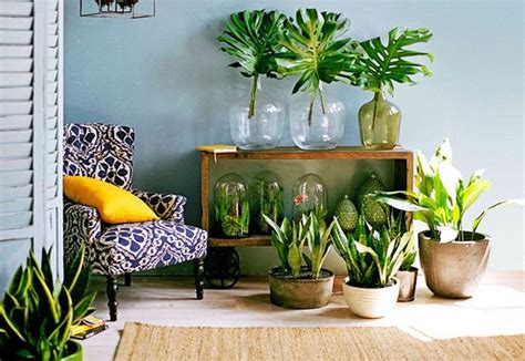 Great Ideas To Display Houseplants