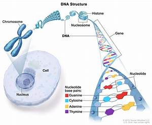 Intoduction To Dna