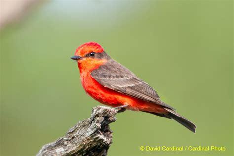 texas hill country bird photo safari may 2015