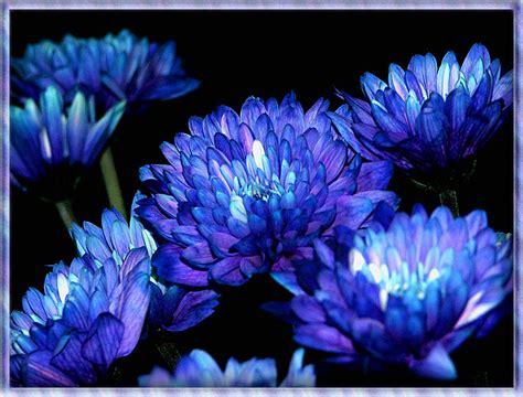blaue blumen frühling blaue blumen foto bild pflanzen pilze flechten bl 252 ten kleinpflanzen natur bilder auf