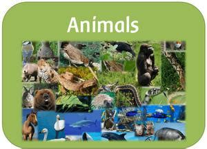 eyfs ks1 ks2 teaching resources year 1 animals including