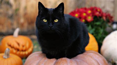 Black Cat Outside