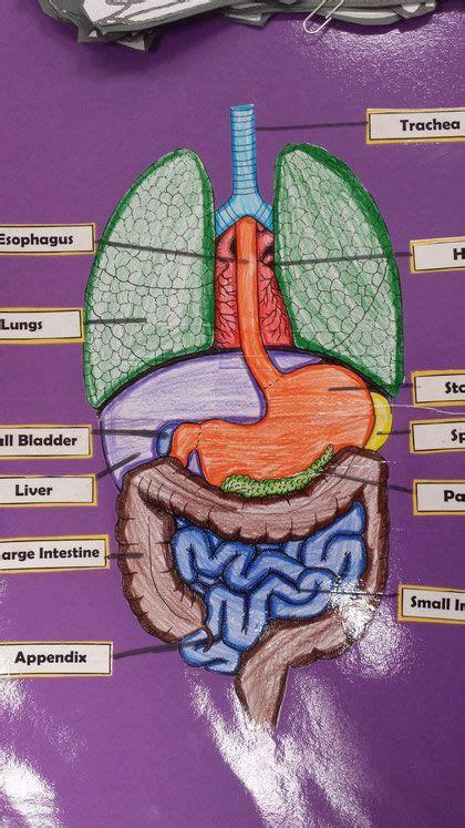 grade human body projects human body science human