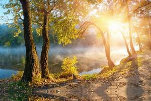 Leaves landscape beautiful nature sunbeams sunlight autumn ...