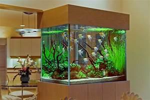 Un Aquarium Design Pas Cher