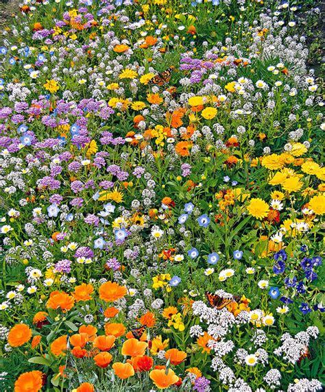 Kaufen Sie Jetzt Blumensaat Schmetterlingsgarten Kaufen