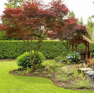 Ahorn Rote Blätter : rot gef rbte ahornb ume immergr ne hecke und blaue hortensien gartenprojekte pinterest ~ Eleganceandgraceweddings.com Haus und Dekorationen