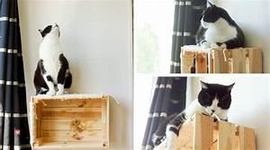 Arbre À Chat Mural : fabriquer un arbre chat mural sans faire de trous ~ Melissatoandfro.com Idées de Décoration