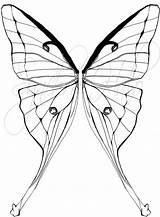 Moth Luna Tattoo Coloring Drawing Synchro Halo Commission Drawings Clip Traditional Drawn Tattoos Deviantart Designs 25kb 1041px Getdrawings sketch template