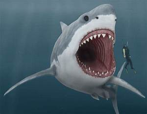 Megalodon Could this Giant Shark Still be Alive ...