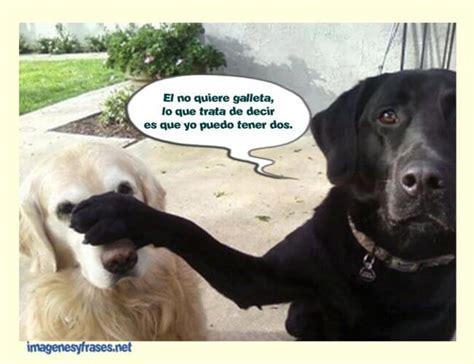 Memes Chistosos - memes chistosos de animales www imgkid com the image kid has it