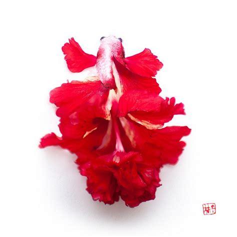 beautiful flower art  lim zhi wei stampede curated
