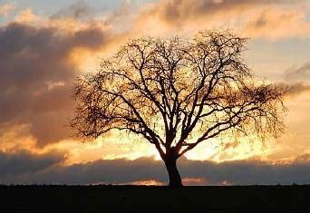 httpbaum natureu