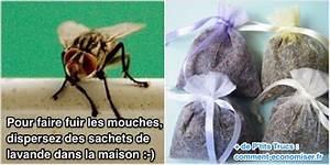Comment Chasser Les Mouches : que faire pour chasser les mouches de la maison le truc ~ Melissatoandfro.com Idées de Décoration