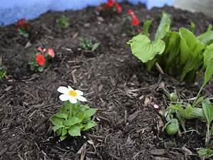 Garten Im Oktober : garten im oktober das ist zu tun und auf keinen fall ~ Lizthompson.info Haus und Dekorationen