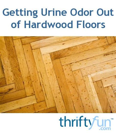 Urine On Hardwood Floors Odor by 17 Best Ideas About Pet Urine On Cat Urine