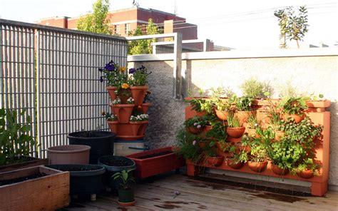 la culture des courgettes dans un potager en balcon