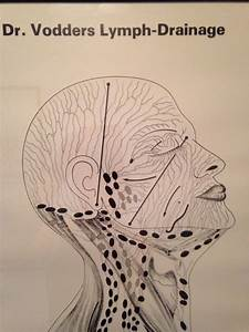 Lymphatic Vessels And Nodes Of The Head And Neck