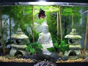 Deco Aquarium Zen : kimotion75 uploaded this image to 39 betta 39 see the album ~ Melissatoandfro.com Idées de Décoration