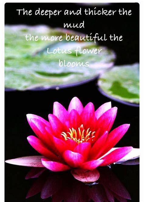 Metaphor for Life... Lotus Flower quote   Amazing flowers ...