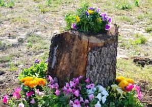 tree stumps turned  gorgeous planters part