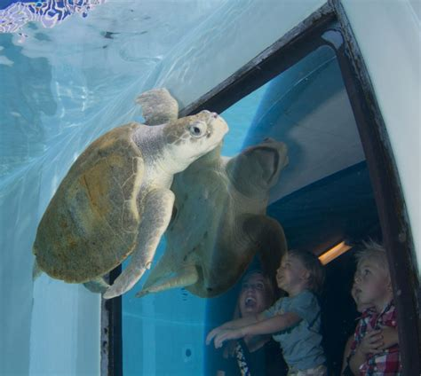how to make the most of your clearwater marine aquarium experience toronto