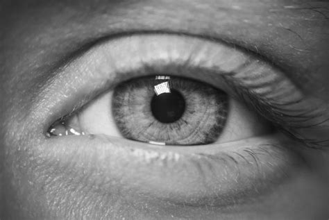 How And Why Did The Human Eye Evolve?