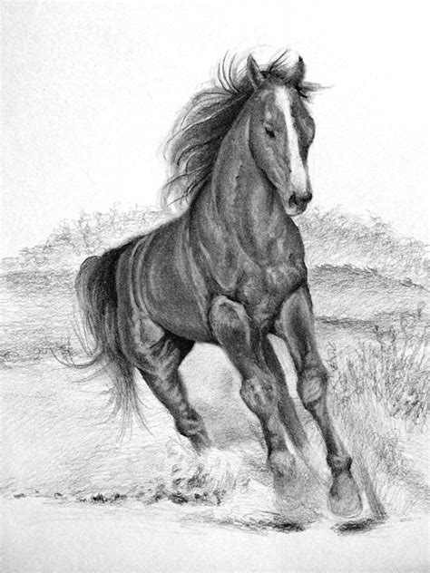 drawing horse horses draw step tutorial sketch tutorials pencil animals background sketching side