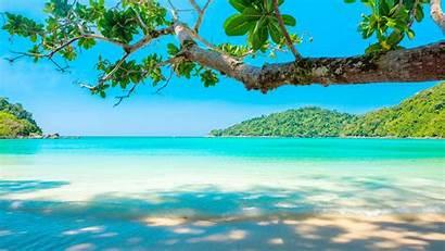 Sea Beach Tropical Tree Iphone 5k Summer