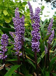 Plants with Purple Flowers Names