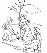 Coloring Trees Plant Tree Cartoon Planting Plantation Clipart Plants Colouring Sketch Template Leaves Without Library sketch template