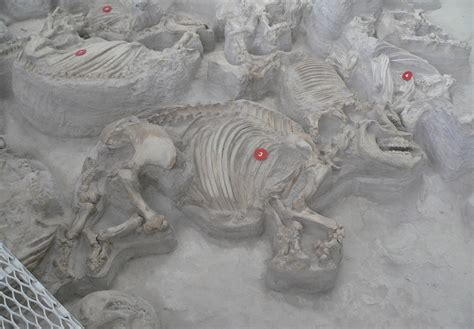 ashfall fossil beds state historical park top 10 discoveries you won t believe exist