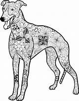 Greyhound Mandala Whippet Pages Ausmalbilder Hund Ausmalen Hunde Ausdrucken Coloring Malen Malvorlage Einfach Ausmalbild Dog Und Mops Vector Zum Kostenloses sketch template