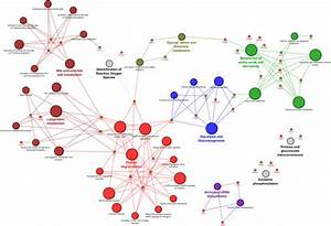 Molecular Interaction And Biological Pathways Networks Of