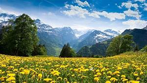 Mountains landscape nature mountain spring meadow flowers ...