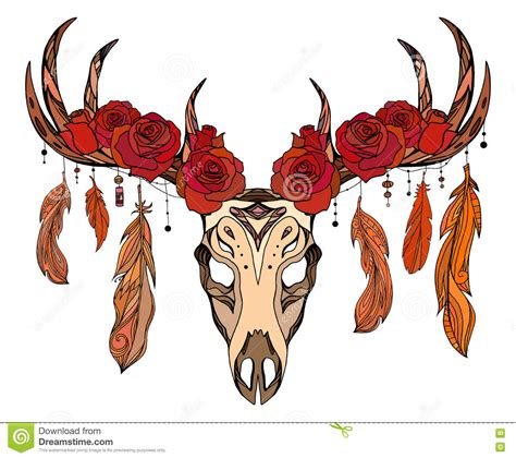illustration   deer skull  roses feathers stock vector image