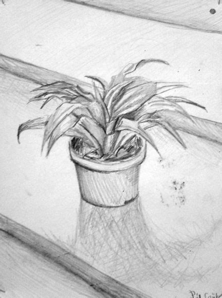 image result  plant pencil drawing plant drawings