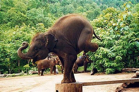 les  belles  de la thailande par les lecteurs