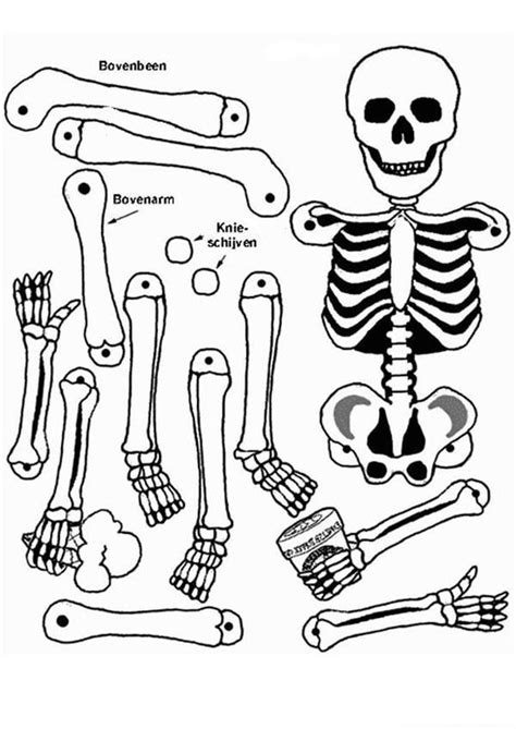 anatomy of a bone coloring anatomical coloring page coloring home