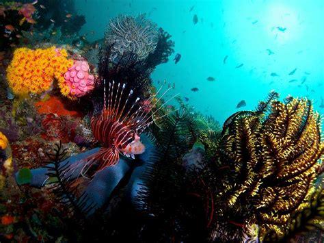 Acacia Dive Resort 阿尼洛 Anilao 5天自由行套票 Diving Express Ltd