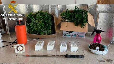 La Guardia Civil desmantela una plantación de marihuana en ...