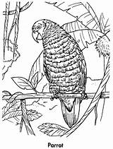 Coloring Parrot Pages Parrots Printable Planet Animals Earth Birds Awesome Animal Coloringpages101 sketch template