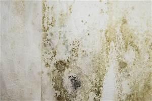 Wie Bekämpfe Ich Schimmel An Der Wand : schimmel auf putz wie sie ihn loswerden ~ Sanjose-hotels-ca.com Haus und Dekorationen