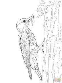 De Specht Kleurplaat cockaded woodpecker coloring page free printable
