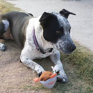 the toughest plush toys for tough chewers With best dog toys for tough chewers